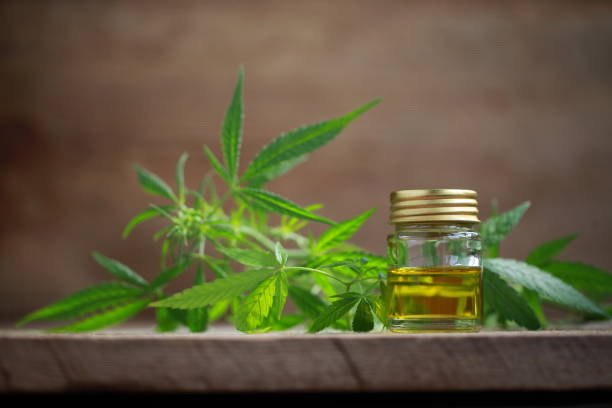 Things to know before offering CBD oil to pets